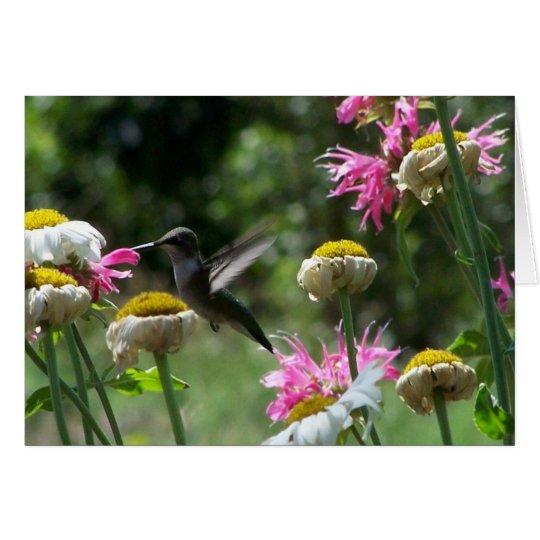 Hummingbird 4 card