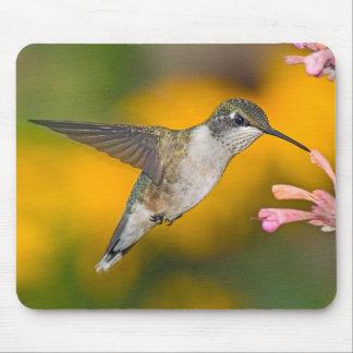 Hummingbird 4 Mousepad