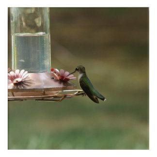 Hummingbird, Acrylic Print. Acrylic Wall Art