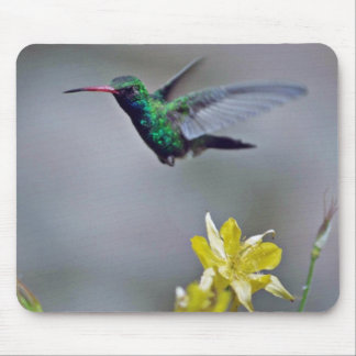 Hummingbird and columbine Red flowers Mouse Pads