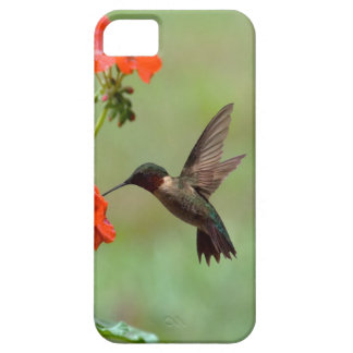 Hummingbird And Flowers Case For The iPhone 5