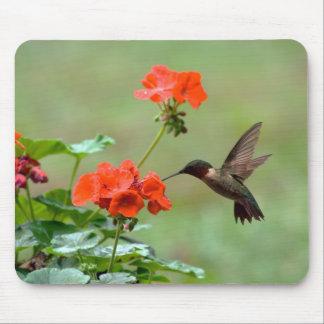Hummingbird And Flowers Mousepad