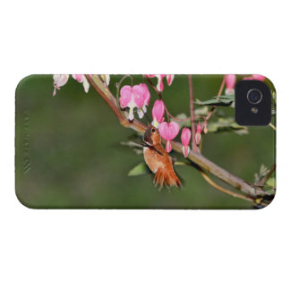 Hummingbird and Flowers Picture iPhone 4 Cover