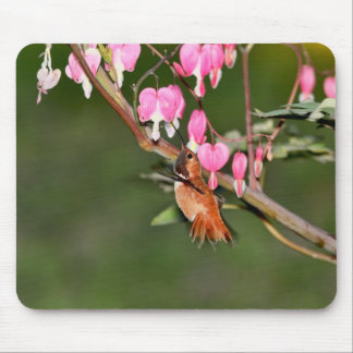 Hummingbird and Flowers Picture Mouse Pad