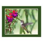 Hummingbird and Fuchsia Art Photo