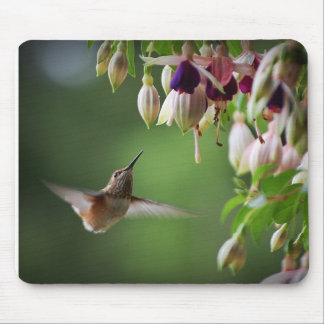 Hummingbird And Fushia Flower Plant Mousepad