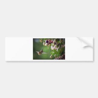 Hummingbird and Fushia Plant Bumper Sticker
