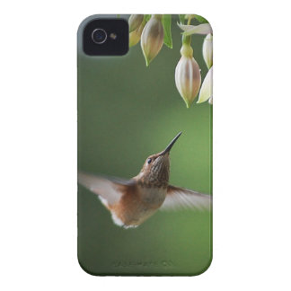 Hummingbird and Fushia Plant iPhone 4 Case
