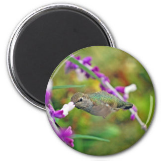 Hummingbird and Mexican Sage II 6 Cm Round Magnet