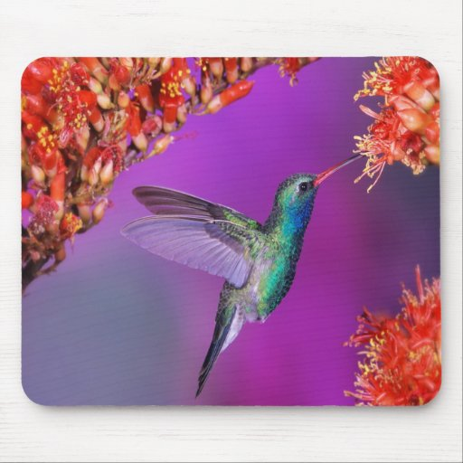 Hummingbird And Orange Flowers Mousepad