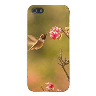 Hummingbird and Pink Flowers Case For iPhone 5