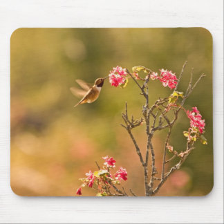 Hummingbird and Pink Flowers Mousepad