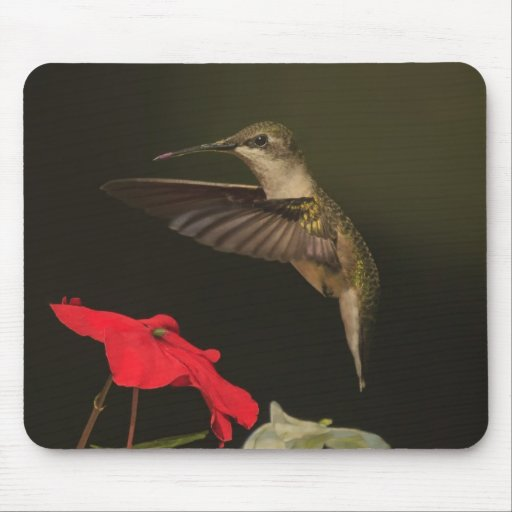 Hummingbird and red flower mouse pads