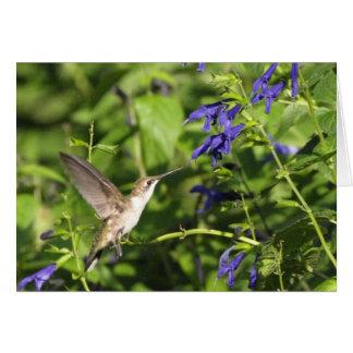hummingbird and salvia greeting card