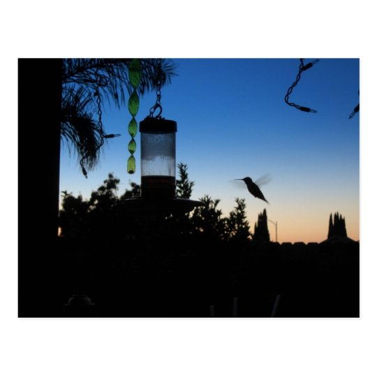 Hummingbird at Sunset Postcard