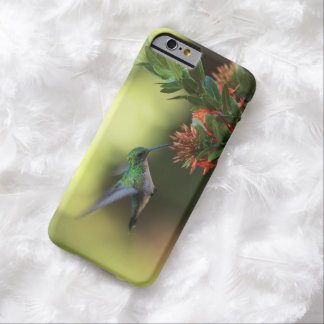 Hummingbird Barely There iPhone 6 Case