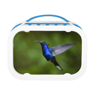 HUMMINGBIRD BINGO BOX, LUNCH BOX