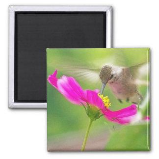 Hummingbird Bird Animal Wildlife Floral Magnet