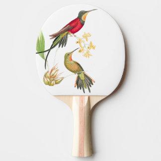 Hummingbird Bird Wildlife Animal Flowers Paddle