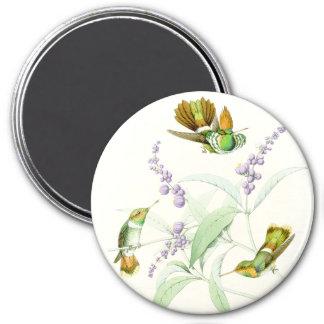 Hummingbird Birds Flowers Floral Wildlife Animals 7.5 Cm Round Magnet