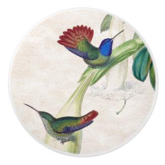 Hummingbird Birds Wildlife Animal Floral Knob