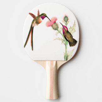 Hummingbird Birds Wildlife Animal Flowers Paddle