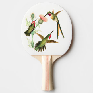 Hummingbird Birds Wildlife Animal Flowers Paddle