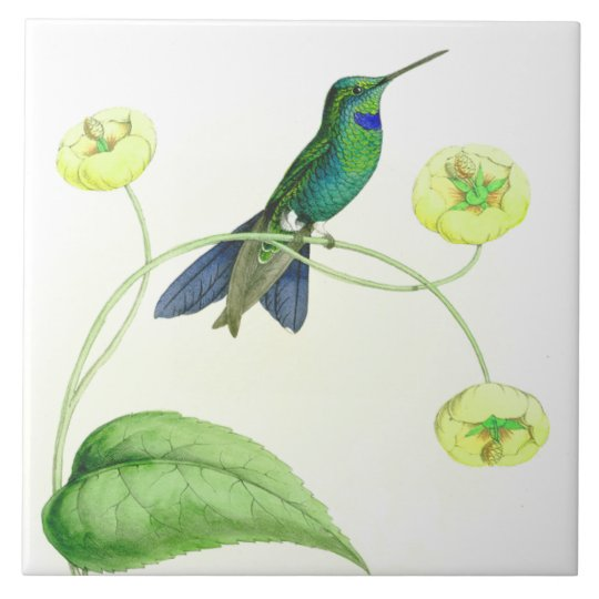 Hummingbird Birds Wildlife Flowers Floral Animals Large Square Tile