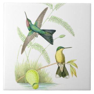 Hummingbird Birds Wildlife Flowers Floral Animals Tile