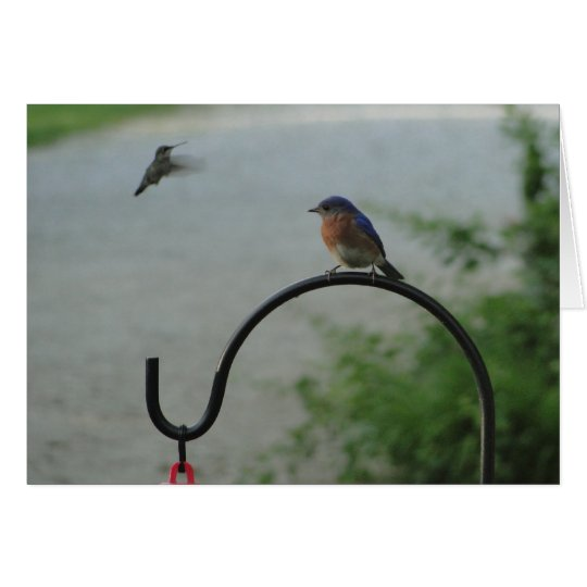 Hummingbird & Bluebird, Religious Card