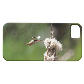 Hummingbird Building a Nest iPhone 5 Cases