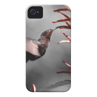 Hummingbird Case-Mate iPhone 4 Cases