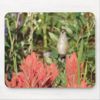 hummingbird coral red flowers mousepads