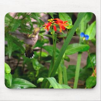 Hummingbird & Crocosmia Flowers Mousepad