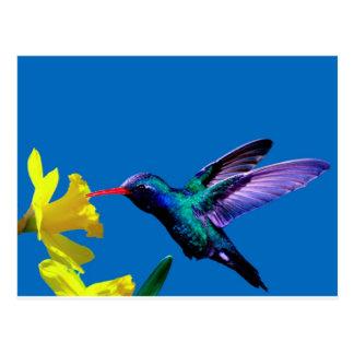 Hummingbird Daffodils II Post Cards