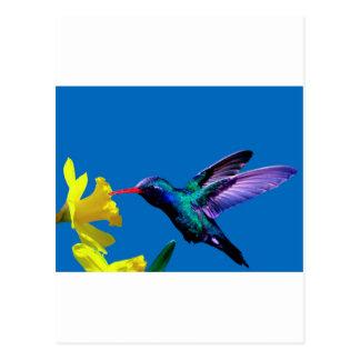 Hummingbird Daffodils II Postcards