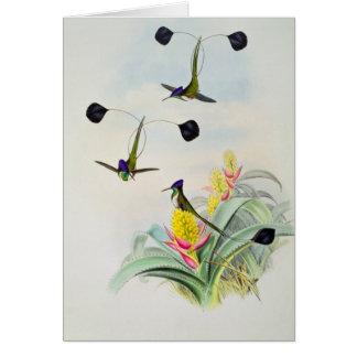Hummingbird, engraved by Walter and Cohn Card