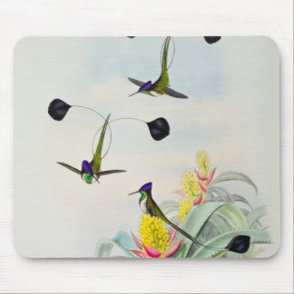 Hummingbird, engraved by Walter and Cohn Mouse Mat