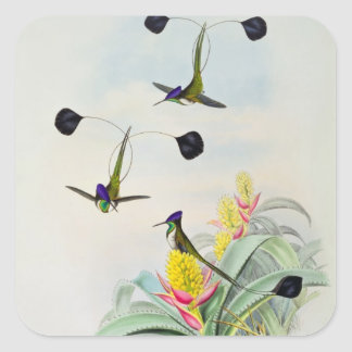 Hummingbird, engraved by Walter and Cohn Square Sticker