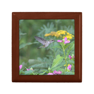 Hummingbird feeding on pink flowers small square gift box