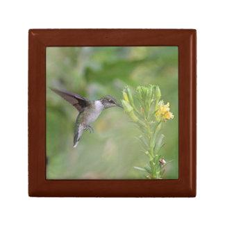 Hummingbird feeding on yellow flowers small square gift box