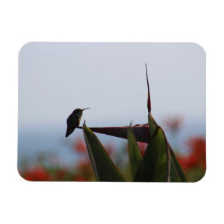 Hummingbird Flexible Photo Magnet