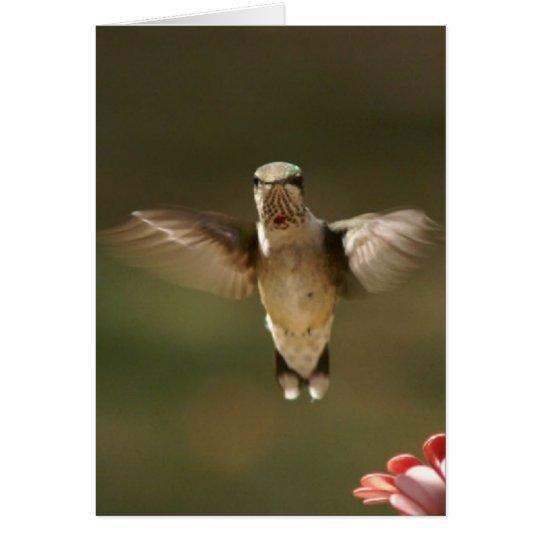 Hummingbird, Greeting Card. Card
