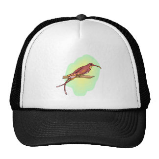 Hummingbird Mesh Hats