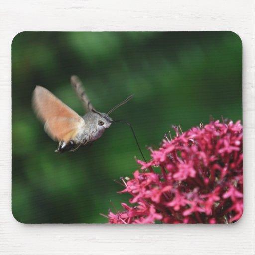 Hummingbird hawk-moth hovering mousepads
