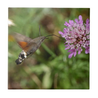 Hummingbird hawk-moth (Macroglossum stellatarum) Tile
