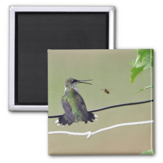 Hummingbird & Honey Bee Magnet