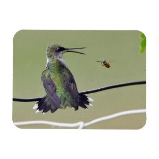 Hummingbird & Honey Bee Rectangular Photo Magnet