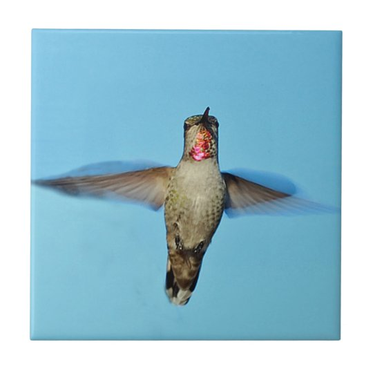 Hummingbird hovering small square tile