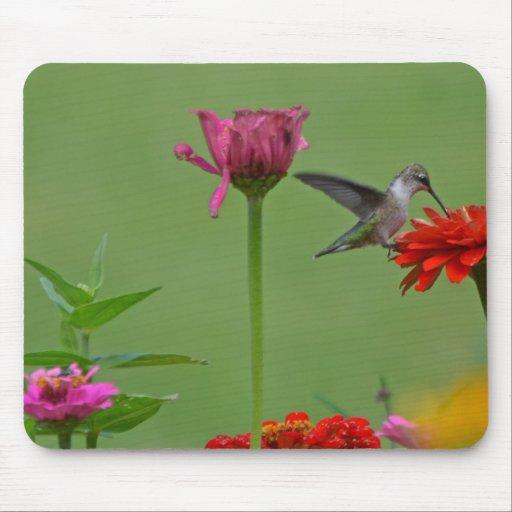Hummingbird in a Flower Garden Mousepad